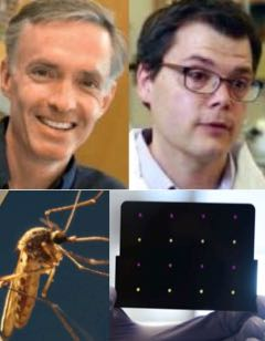 JC, KP, Zika, test
